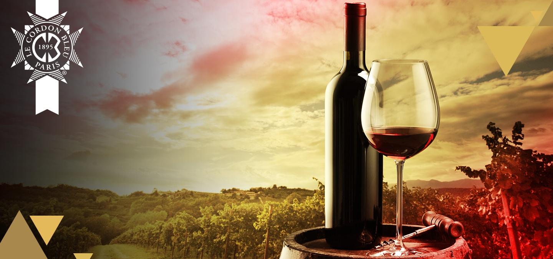 vinos_españa_banner